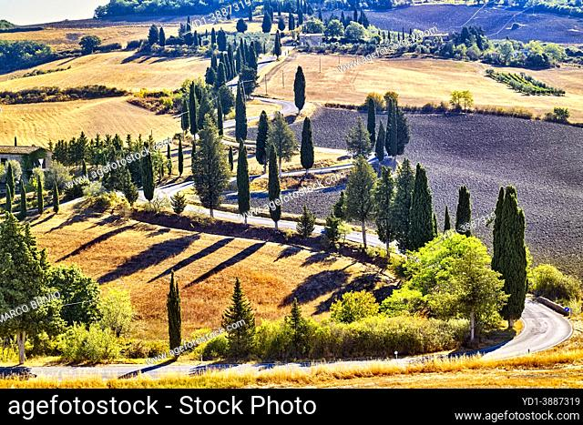 Cypresses S-Road. Monticchiello Val d'Orcia Tuscany Italy