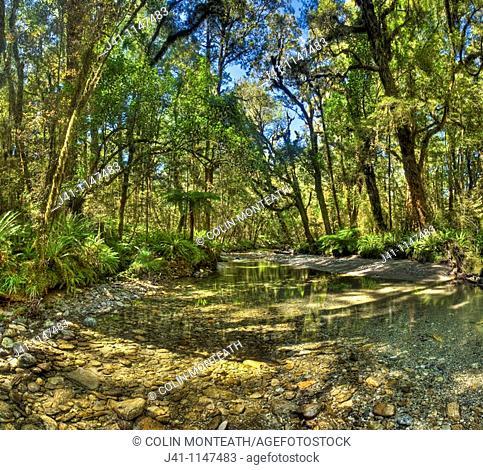 Fossil Creek panorama, Inland Pack Track, Paparoa National Park, West Coast, New Zealand