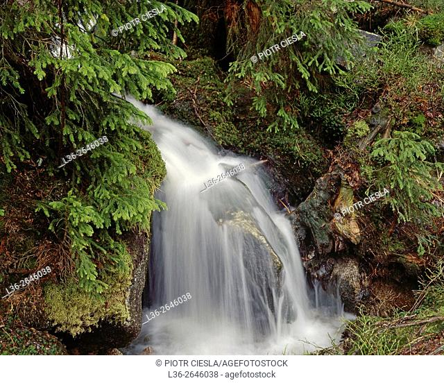 Stream in a forest. Sudety Mountains. Poland