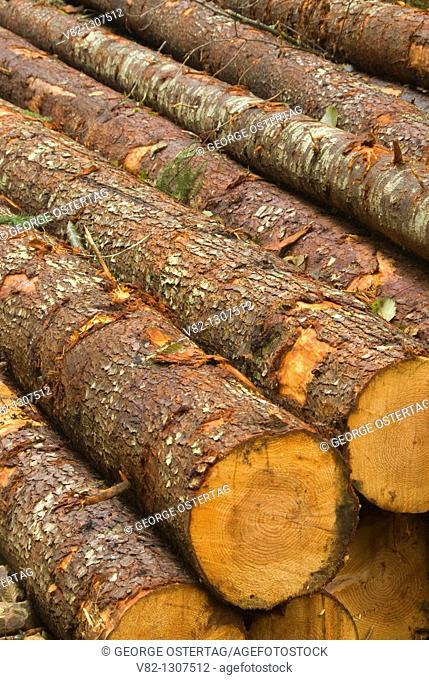 Logs recently cut, Tillamook State Forest, Oregon