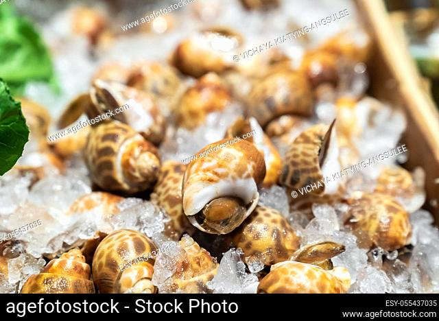 Fresh Areola Babylon snails in seafood on ice buffet bar