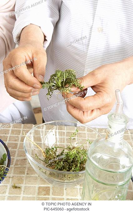 Making Salads with Herb