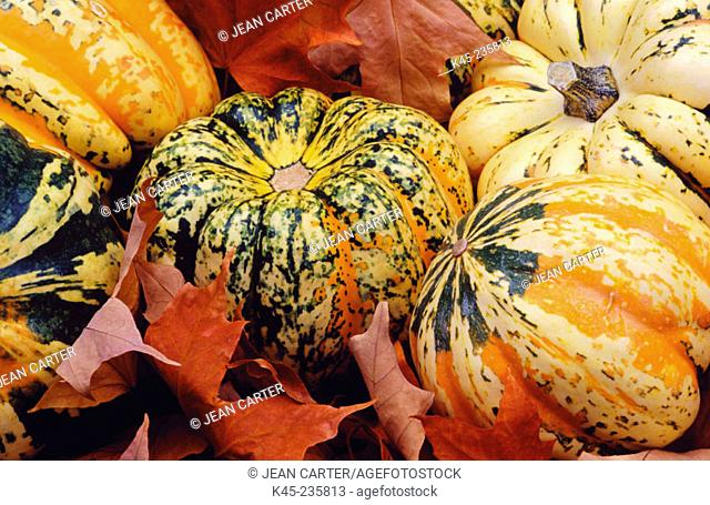Carnival Squash with fall leaves