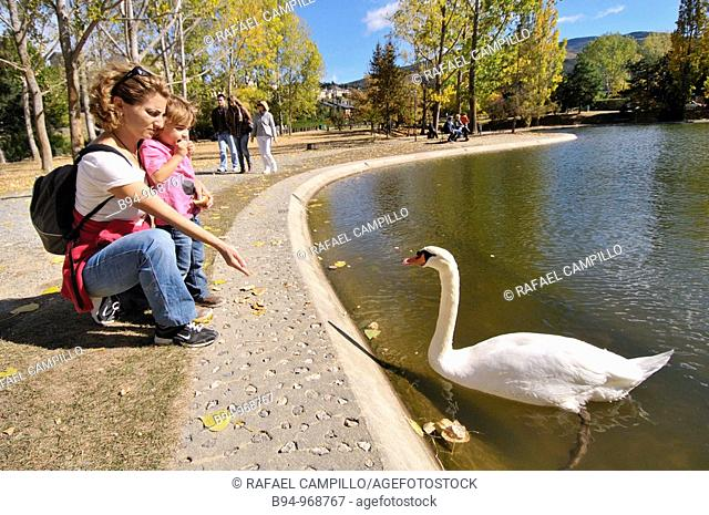 People with swan by the Osseja lake in autumn. Languedoc-Roussillon, Pyrenees-Orientales, France