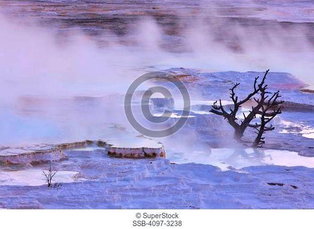 Mineral deposits at a hot spring, Mammoth Hot Springs, Yellowstone National Park, Wyoming, USA