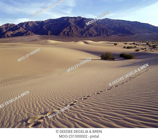 Single track of footsteps in , Death Valley National Park. Mequite Flats Sand Dunes