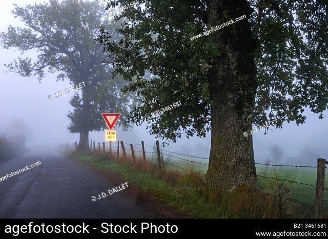 France, Auvergne, Cantal, Foggy morning near Maurs