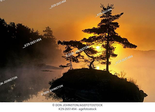 White pines in McGregor Bay silhouetted at sunrise, Whitefish First Nation, Ontario, Canada