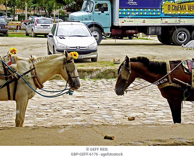 Animals, horses, Matriz Square, Paraty, Rio de Janeiro, Brazil
