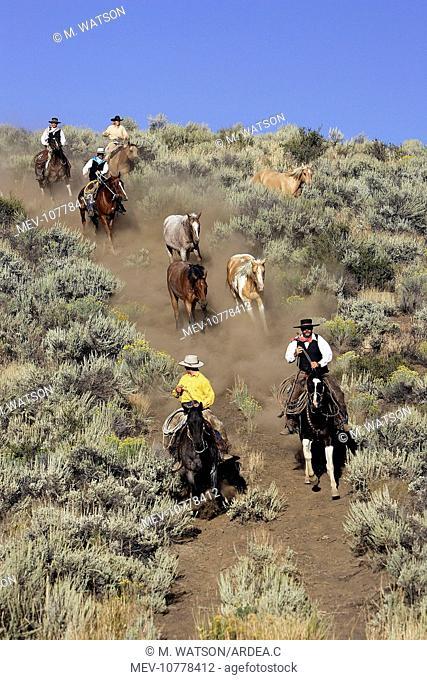 Cattlemen herding Quarter / Paint Horses