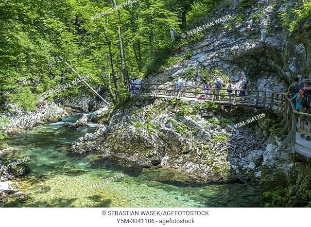 Tourists walking inside the Vintgar Gorge on a wooden path, Podhom, Upper Carniola, Slovenia, Europe
