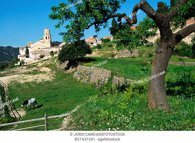 Tivissa. Ribera d'Ebre, Tarragona province. Catalonia, Spain