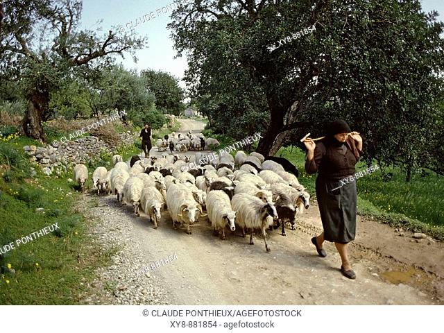 Shepherds-and-sheeps