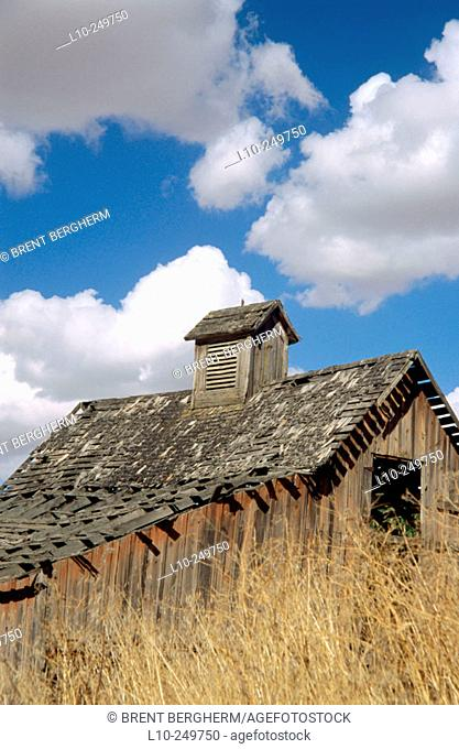 Old barn in wheat field with blue cloudy sky in Palouse region. Washington. USA