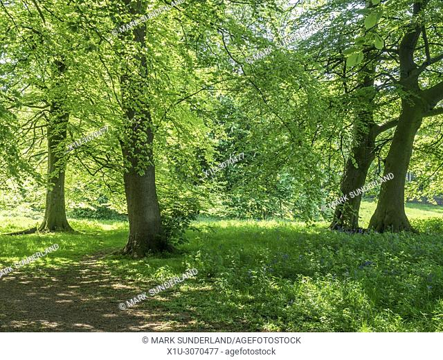 Jacob Smith Park 30 acres of parkland bequeathed to Knaresborough by Winifred Jacob Smith MBE Knaresborough North Yorkshire England