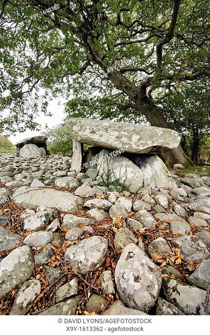 Dyffryn Ardudwy 6000 year old prehistoric megalithic dolmen tomb  Two burial chambers in long barrow cairn  Gwynedd, Wales, UK