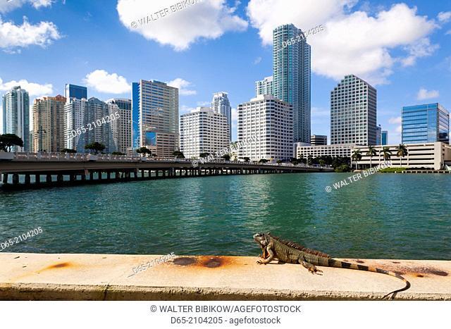 USA, Florida, Miami, city skyline from Brickell Key with iguana