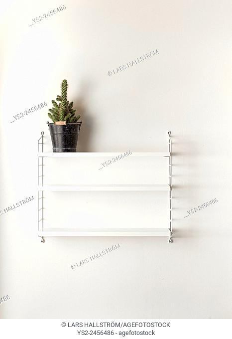 White wall in home interior. Empty bookshelf with a cactus