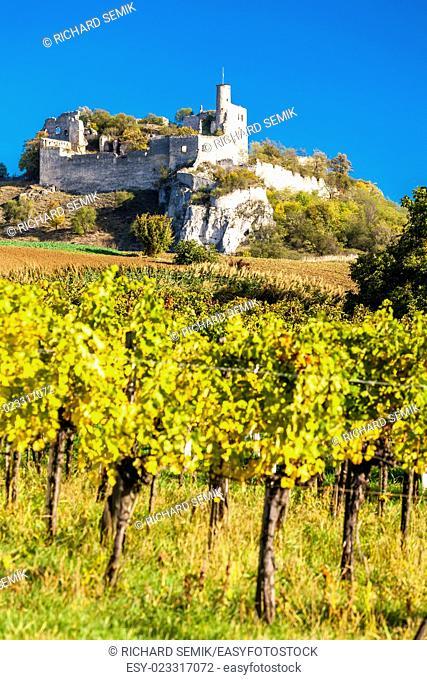 ruins of Falkenstein Castle with vineyard in autumn, Lower Austria, Austria