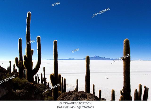 Isla del Pescado. salar de Uyuni. Bolivia
