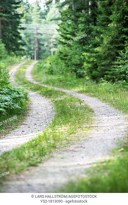 Empty gravel road lingering through forest