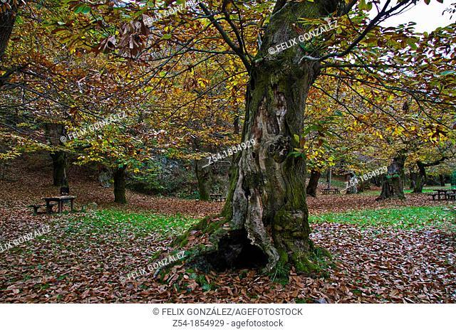 Recreation area in a Chestnut forest, Asturias, Spain