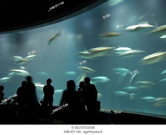 People watching fish in an aquarium, Tokyo, Japan