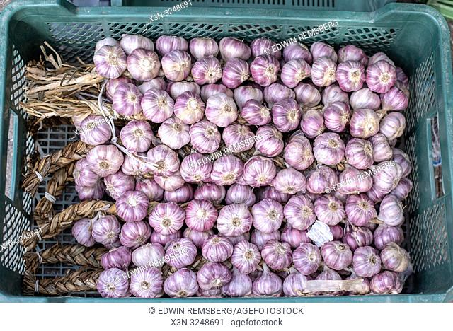 Close shot of garlic (Allium sativum) bulbs laying in a basket at the Bronisze Wholesale Market - one of the biggest fruits and vegetables markets in Poland