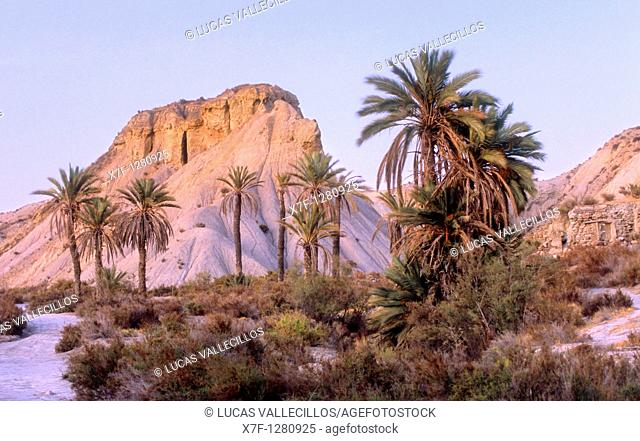 Desert of Tabernas, the only real desert of Europe Dry riverbed Almeria province, Andalucia, Spain