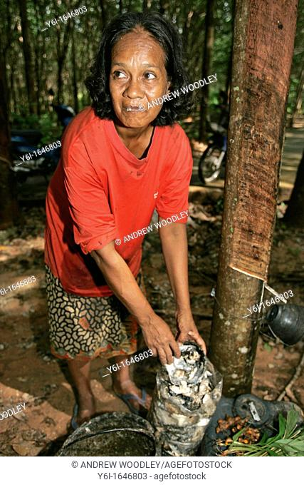 Woman peels latex into plastic collection bag from coconut shell bowl Ko Sukorn island Thailand