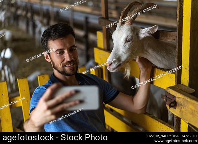 guy takes a selfie on the phone with a goat
