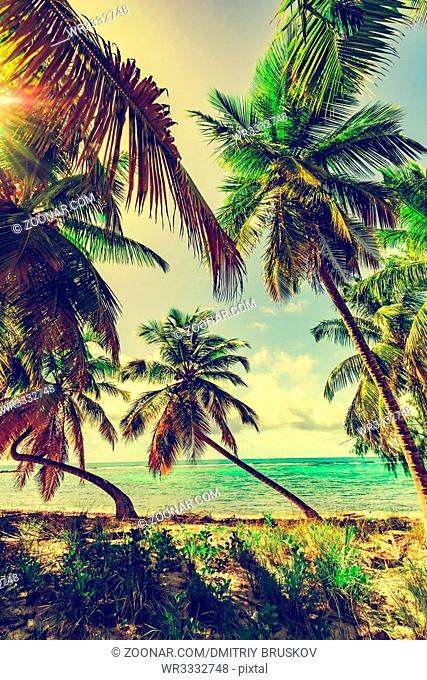 toning tropical coconut palms tree on a ffone of blue sky and sun on the coast of the Caribbean sea.Dominican Republic