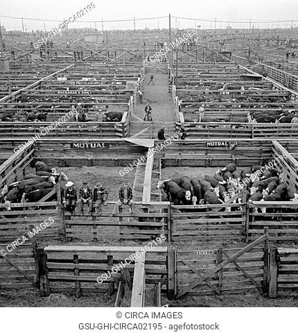 Cattle in Pens at Union Stockyards before Auction Sale, Omaha, Nebraska, USA, Marion Post Wolcott for Farm Security Administration, September 1941