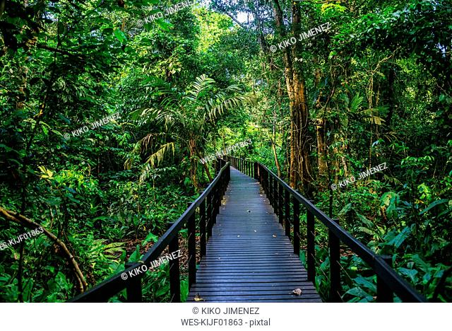 Costa Rica, Limon, Wooden pathway in Cahuita National Park