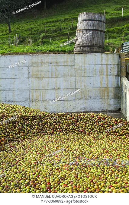 Apples for making cider. Sidrería Urbitarte, Ataun, Guipuzcoa, Basque Country, Spain