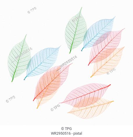 Real leaf with detail vein and various colors, decoration elements