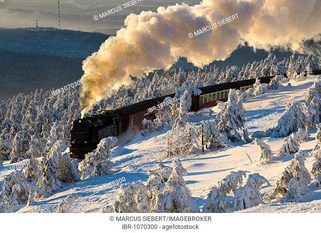 Harz narrow-gauge railroad in a wintery forest, steam engine, Brocken, Blocksberg, Harz National Park, Saxony-Anhalt, Germany, Europe