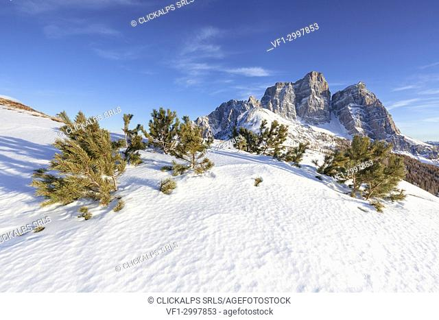 North-west wall of the mount Pelmo from Alpe Prendera in winter, Col Roan, Dolomites, Borca di Cadore, Belluno, Veneto, Italy