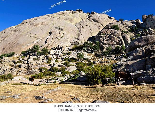 The Yelmo cliff in the Pedriza  Parque Regional de la Cuenca Alta del Manzanares  Sierra de Guadarrama  Manzanares el Real  Madrid  Spain