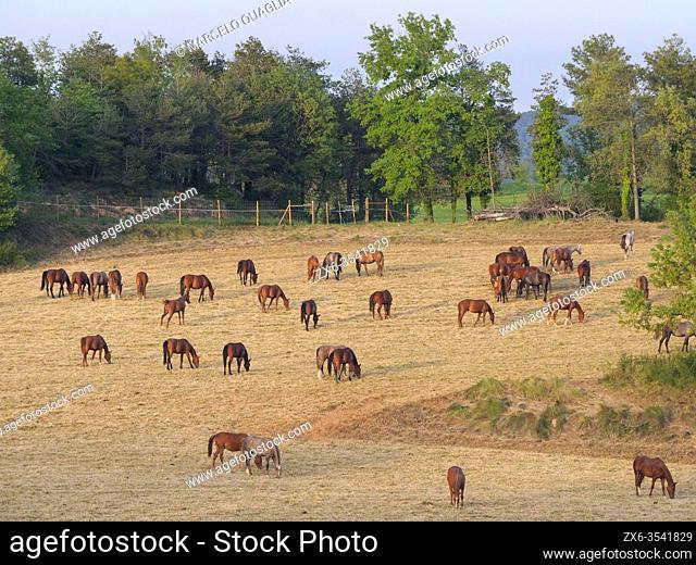 Horses. Sant Boi de Lluçanès vilage countryside. Lluçanès region, Barcelona province, Catalonia, Spain