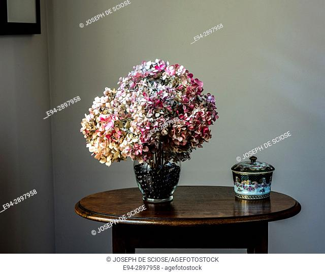 An arrangement of dried hydrangea flowers in a vase on a table in a home
