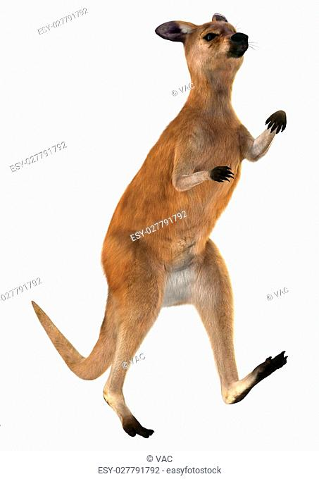 3D digital render of a boxing red kangaroo isolated on white background