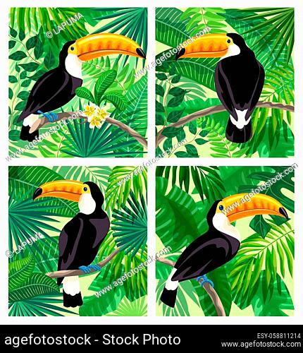 toucan bird in the rainforest. color vector illustration