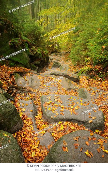 Wilde Hoelle trail in autumn in the Saechsische Schweiz, Saxon Switzerland, Elbe Sandstone Mountains, Saxony, Germany, Europe