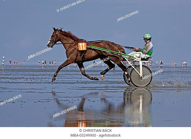 Duhner mudflat races, Duhnen, Cuxhaven, Lower Saxony, Germany, Europe