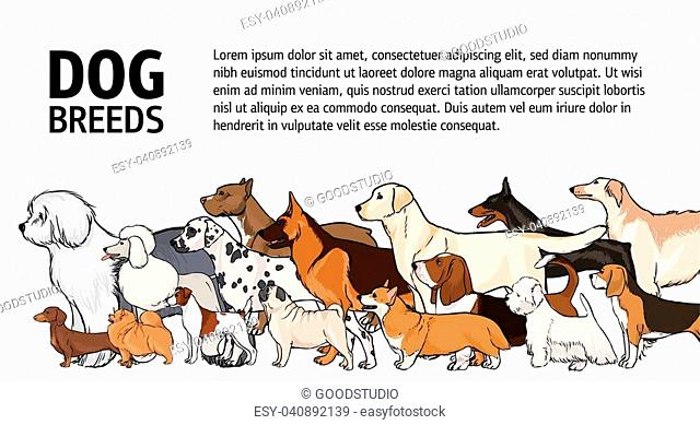 Horizontal banner with dogs of different breeds and place for text on white background. Various beautiful purebred pet animals with long and short haired coats