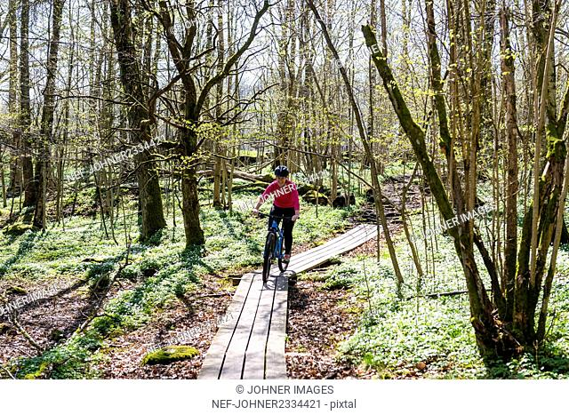 Cyclist in spring forest