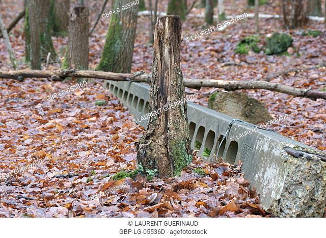 Tree, Forest, Boissy sous Saint Yon, Essonne (91), France
