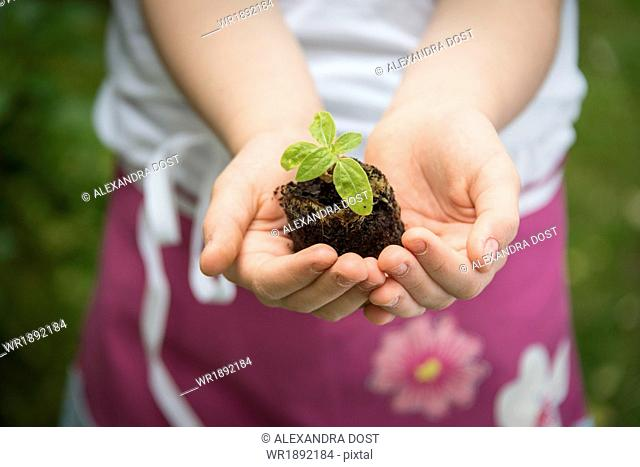 Little girl gardening, holding seedling in hands