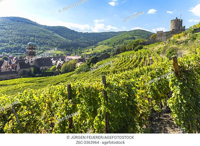 town Kaysersberg and its castle, Alsace Wine Route, France, surrounded by vineyards and Vosges mountains